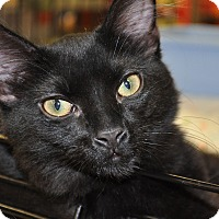 Adopt A Pet :: Falkor - La Canada Flintridge, CA