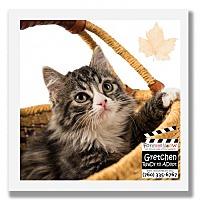 Adopt A Pet :: Gretchen - Palm Desert, CA