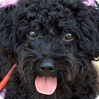 Adopt A Pet :: MANDELA (video) - Los Angeles, CA