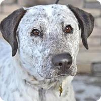 Adopt A Pet :: Deon - Salt Lake City, UT