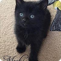 Adopt A Pet :: Mochi - Island Park, NY