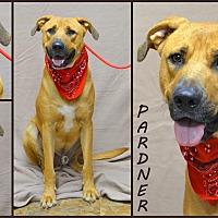 Hound (Unknown Type)/Labrador Retriever Mix Dog for adoption in Jackson, Mississippi - Pardner