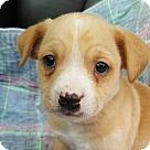 Adopt A Pet :: Gar! **FOSTER NEEDED**