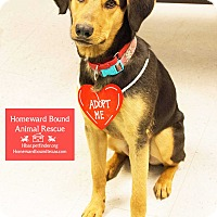 Adopt A Pet :: Roady - Bedford, TX