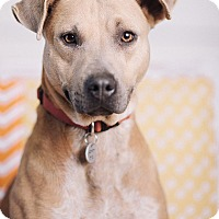 Adopt A Pet :: Lily - Portland, OR