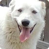 Adopt A Pet :: Anya - Joplin, MO