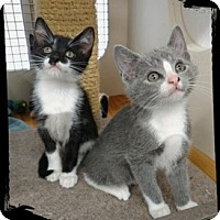 Adopt A Pet :: Maverick and Cheyenne - Richmond, VA