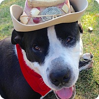 Adopt A Pet :: Cowboy - I have a flaw! - Los Angeles, CA