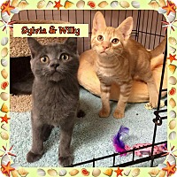 Adopt A Pet :: Willy - Atco, NJ