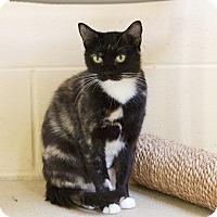 Adopt A Pet :: Miley - Chula Vista, CA