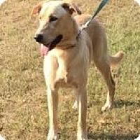Adopt A Pet :: Jack - sweet boy - New Hartford, NY