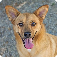 Shepherd (Unknown Type)/Australian Cattle Dog Mix Dog for adoption in Salt Lake City, Utah - JD