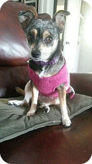 Chihuahua Mix Dog for adoption in Monrovia, California - Lizzie