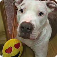 Adopt A Pet :: Cruz - Anchorage, AK