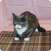 Adopt A Pet :: Rizzo - Kankakee, IL