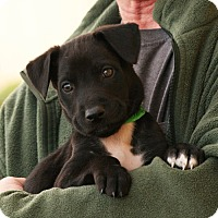 Adopt A Pet :: Timmy - Palmdale, CA