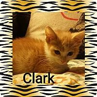 Adopt A Pet :: Clark - joliet, IL