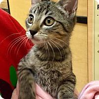 Adopt A Pet :: Becca - Scottsdale, AZ