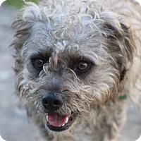 Adopt A Pet :: Taco - Sudbury, MA