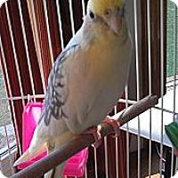 Adopt A Pet :: LILEA - Mantua, OH
