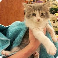 Adopt A Pet :: Lenny - Reston, VA