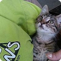 Adopt A Pet :: Bernie - Sterling Hgts, MI