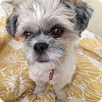 Adopt A Pet :: Theodore - Austin, TX