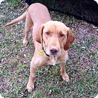 Adopt A Pet :: Gabe & Shasta - Lewisville, IN