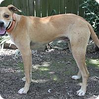 Adopt A Pet :: Ranger - Oakland, AR