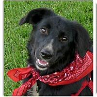 Adopt A Pet :: Bella PENDING - Sacramento, CA