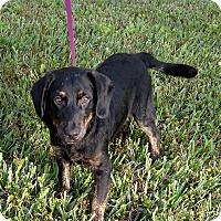 Adopt A Pet :: Buck - Oviedo, FL