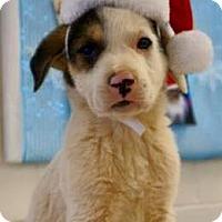 Adopt A Pet :: Bialy - Carteret/Eatontown, NJ