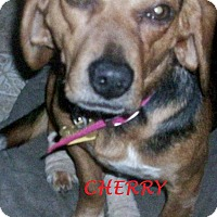 Adopt A Pet :: CHERRY - Ventnor City, NJ