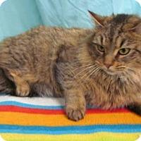 Adopt A Pet :: Rosie - Waldorf, MD
