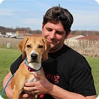 Adopt A Pet :: Taz - Elyria, OH