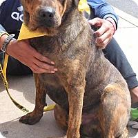 Adopt A Pet :: Nick - Rockville, MD