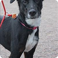 Adopt A Pet :: Isolde - Duluth, MN