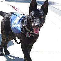 Adopt A Pet :: Luna - Greensboro, NC
