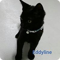 Adopt A Pet :: eddyline - Muskegon, MI