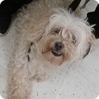 Adopt A Pet :: Kipper - Avon, NY