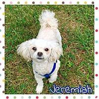 Adopt A Pet :: Jeremiah - Jasper, IN