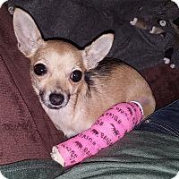 Adopt A Pet :: Tina - Grand Rapids, MI