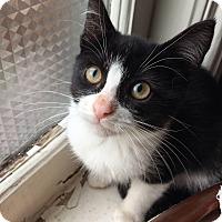 Adopt A Pet :: Holt - Toronto, ON