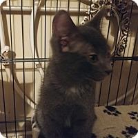 Adopt A Pet :: MADDON - Bolingbrook, IL