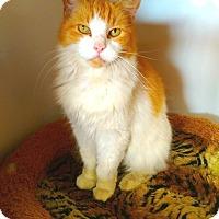 Adopt A Pet :: Marmalade - Seminole, FL
