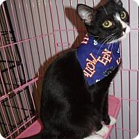 Adopt A Pet :: Gail - Somerset, KY