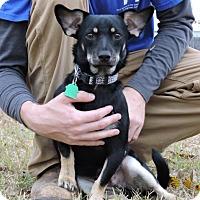 Adopt A Pet :: Jack - Berkeley Heights, NJ