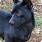 Adopt A Pet :: Suzie