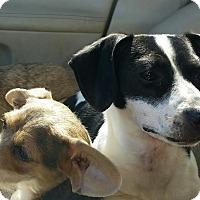Adopt A Pet :: Rosie-9 Pounds - Westport, CT