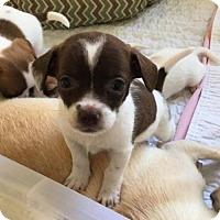 Adopt A Pet :: Angie - Arlington, WA